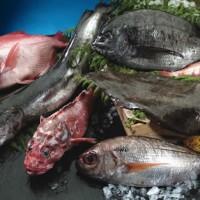 pescados-gallegos